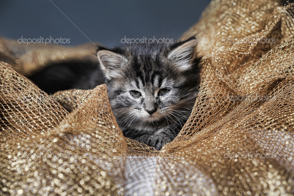Lovely fluffy kitten — Stock Photo #6838476