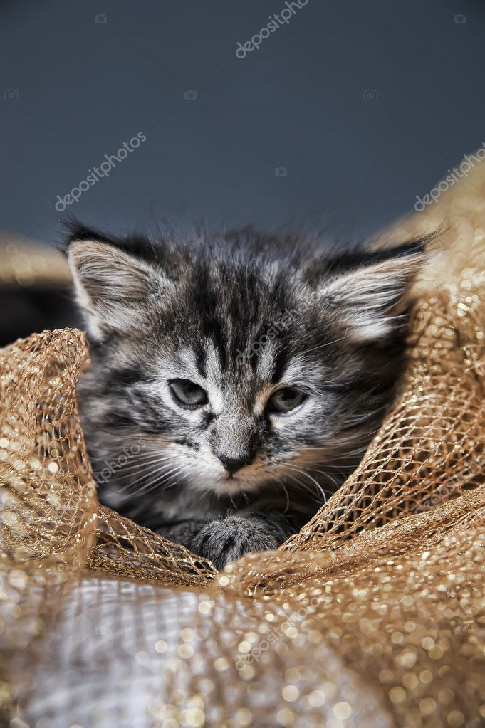 Lovely fluffy kitten — Stock Photo #6838493