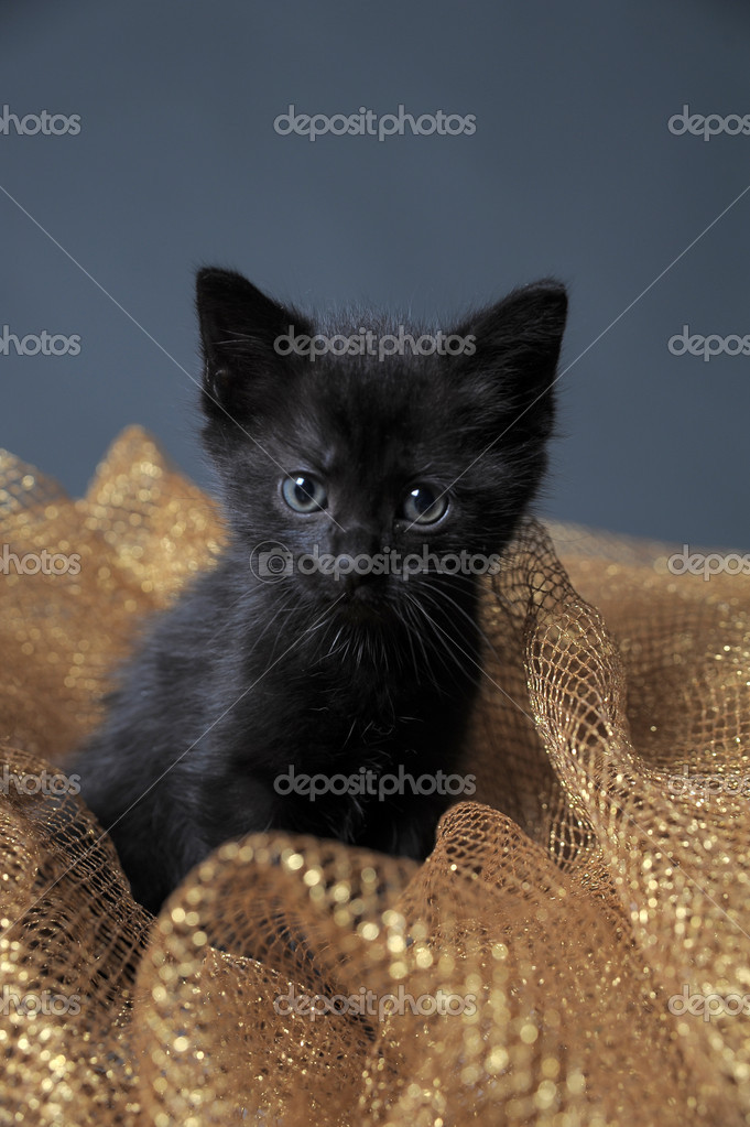 Black Kitten — Stock Photo #6838599