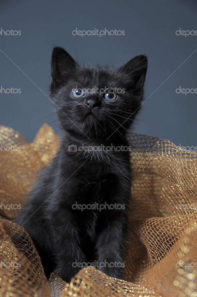 Black Kitten — Stock Photo #6838676