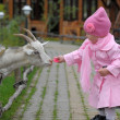 The little girl with a goat — Stock Photo #7320190