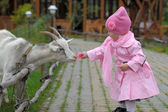 The little girl with a goat — Stock Photo
