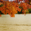 Autumn leaves over the river — Stock Photo