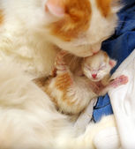 Cat with newborn kitten — Stock Photo