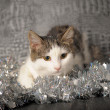 Lying christmas kitten — Stock Photo