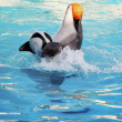 Dolphine dolphin playing happily — Stock Photo