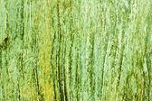 Groene houtstructuur — Stockfoto