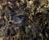 Mold fungus — Stock Photo
