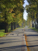 Walkway in the autumnal city — Stock fotografie