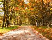 Sonbahar park — Stok fotoğraf