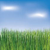 Green grass on the blue sky background — Stock Vector