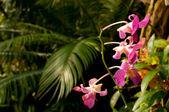 джунгли — Стоковое фото