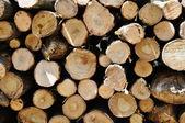 Pile of log — Stock Photo