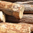 Pile of log - Stock Photo