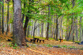Bela floresta colorida e os bancos. — Fotografia Stock