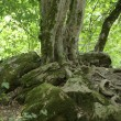 Stock Photo: Old tree above 5000 years old burial mound.