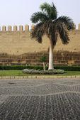 Citadel's wall and palm tree near it. Cairo, Egypt. — Stock Photo