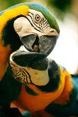 The parrots. — Stock Photo