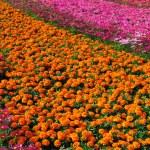 Garden full of flowers — Stock Photo