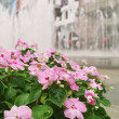 Flowers with fountain background — Stock Photo