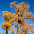 Stock Photo: Little yellow leaves tree