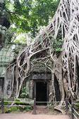 Camboya - angkor - ta prohm templo — Foto de Stock