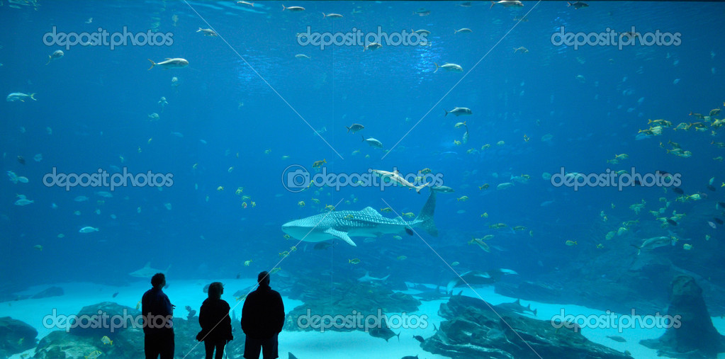Whale Shark — Stock Photo #6801278