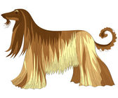 Vector dog Afghan hound breed — Stock Vector