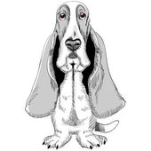 Vector dog Basset Hound breed — Stock Vector
