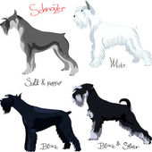 Vector set of purebred dogs of different colors Schnauzer — Stock Vector