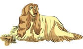 Vector dog Afghan hound breed color — Stock vektor