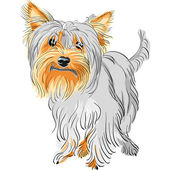 Vector pedigreed dog Yorkshire terrier — Stock Vector