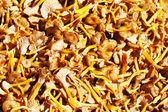 Lots of mushrooms — Stock Photo