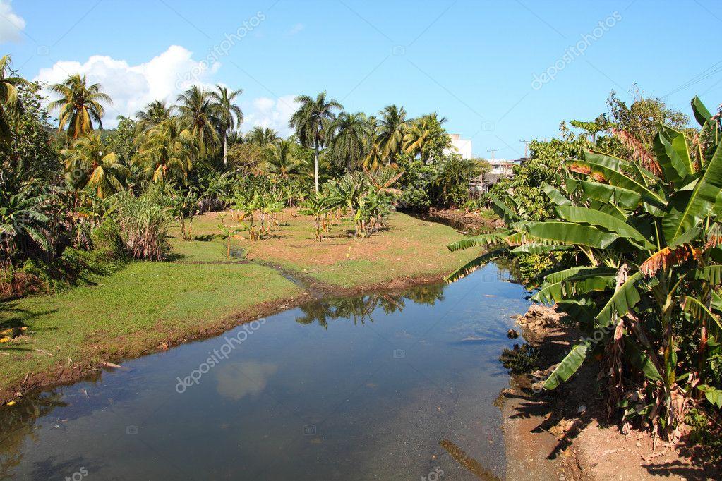 巴拉科亚古巴-皇家棕榈树和香蕉树
