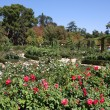 Botanical garden in Madrid — Stock Photo