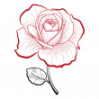 Hand drawing rose — Stock Vector