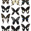 Stock Photo: Many butterflies