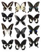 Many butterflies — Stock Photo