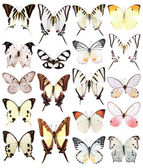 Many butterflies — Stock Photo