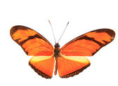 Orange färgglad fjäril — Stockfoto
