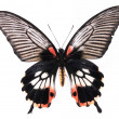 Royalty-Free Stock Photo: Black and red butterflies isolated on a white background