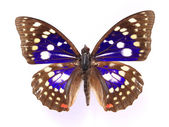 Orange colorful butterfly — Stock Photo