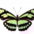 Stock Photo: Brown and green butterfly