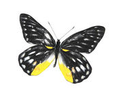 Svart och gul fjäril — Stockfoto