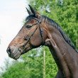 Stock Photo: Portrait of beautiful mare
