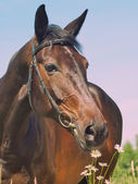 Portrait of beautiful mare with camomiles art toned — Stock Photo