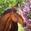 Portrait of pretty horse near lilac flower — Foto Stock
