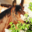 Portrait of nice horse near flower — Stock Photo