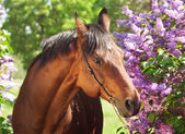 Portrait of pretty horse near lilac flower — Stock Photo