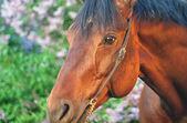 Portrait of pretty horseat sunset closeup — Stock Photo
